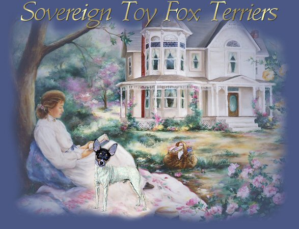 Sovereign TFT, Champion Toy Fox Terriers, TFT's, Valcopy's Kasey Kahne
